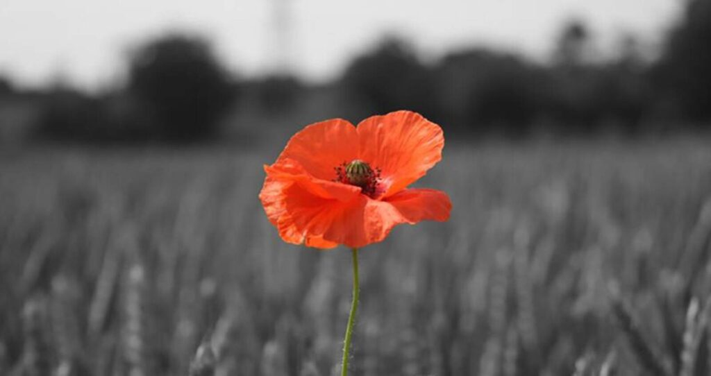 Remembrance Day Act of Remembrance